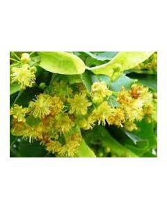 ЛИПА цветы 50г